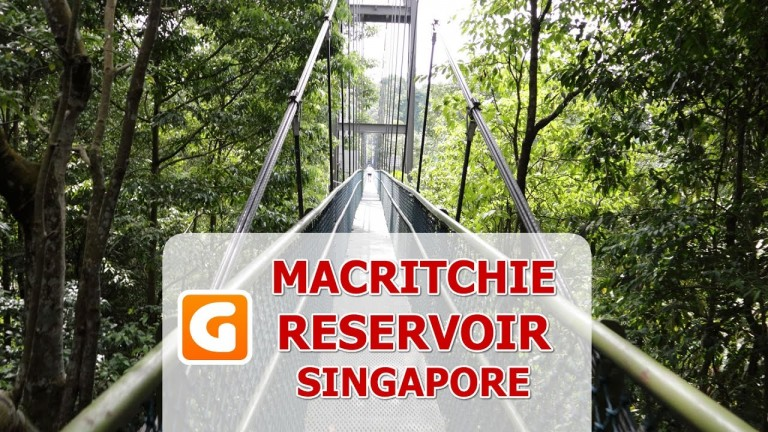 MacRitchie Reservoir Park Tree Top Walk – Things To Do In Singapore Guided Tour